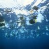 Plastic garbage is swimming on the water surface --- Image by © Gary Bell/Corbis