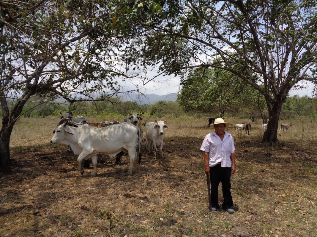 Panama: the ranching industry has moved into Darién National Park